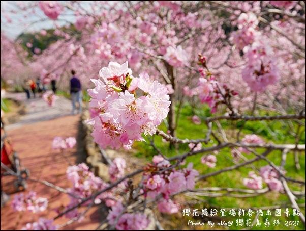 櫻花鳥森林-25.jpg