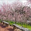 櫻花鳥森林-22.jpg