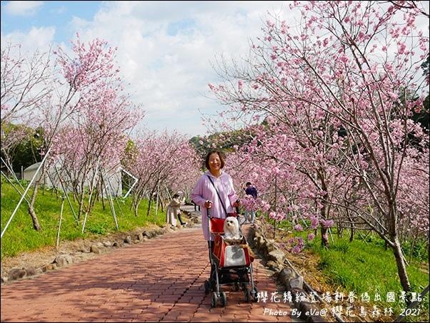 櫻花鳥森林-23.jpg