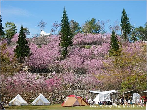 櫻花鳥森林-30.jpg