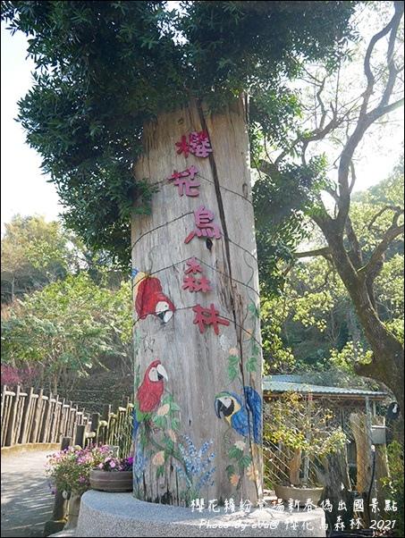 櫻花鳥森林-31.jpg