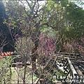 櫻花鳥森林-42.jpg