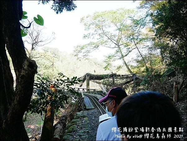 櫻花鳥森林-41.jpg