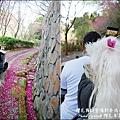 櫻花鳥森林-39.jpg