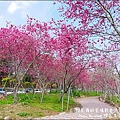 櫻花鳥森林-53.jpg