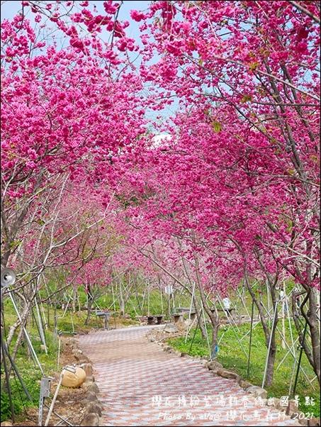 櫻花鳥森林-55.jpg