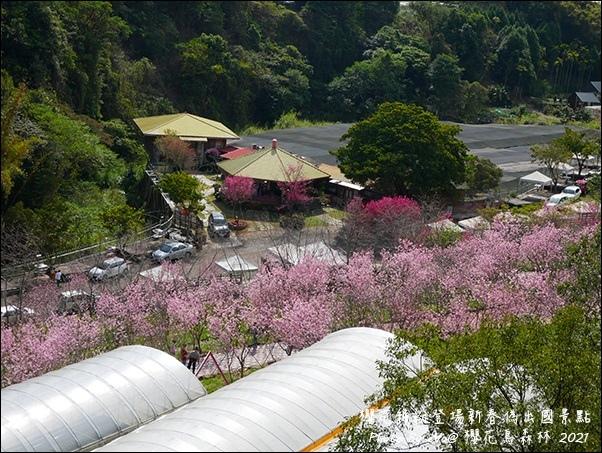 櫻花鳥森林-58.jpg