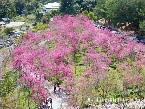 櫻花鳥森林-90.jpg