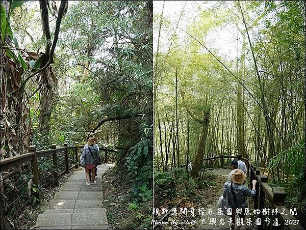 太興岩景觀茶園步道-11.jpg