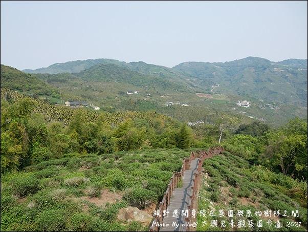 太興岩景觀茶園步道-07.jpg