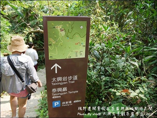 太興岩景觀茶園步道-10.jpg