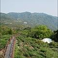 太興岩景觀茶園步道-08.jpg