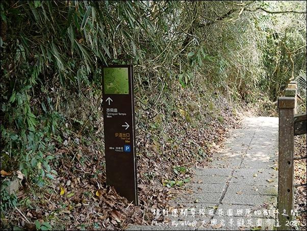 太興岩景觀茶園步道-13.jpg