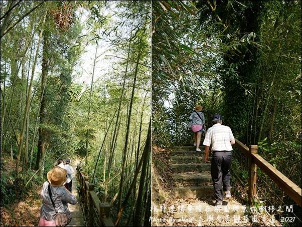 太興岩景觀茶園步道-12.jpg