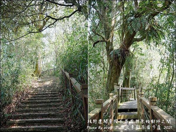 太興岩景觀茶園步道-14.jpg