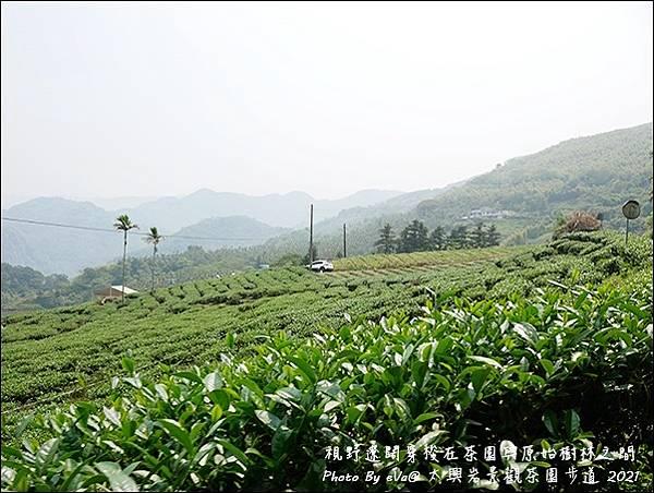 太興岩景觀茶園步道-21.jpg