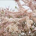 竹崎親水公園-04.jpg