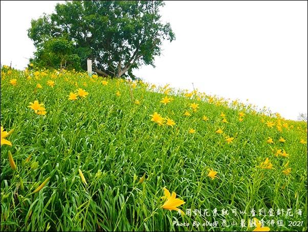 虎山巖金針花-10.jpg