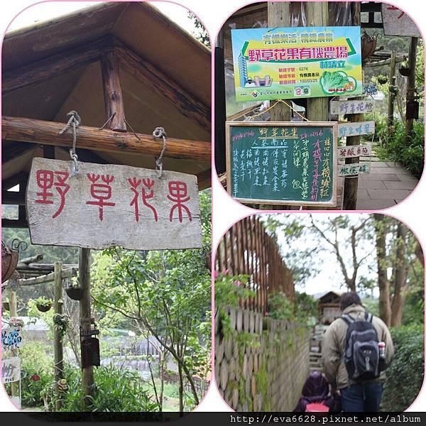 [遊]內湖野草花果3y4m-1
