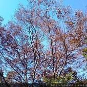 2011-10-28 10.35.18.jpg
