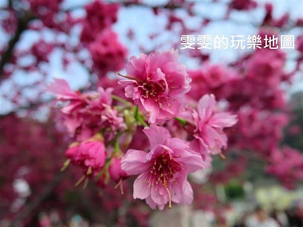 IMG_1145_副本.jpg
