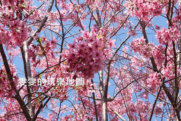 IMG_1392_副本.jpg