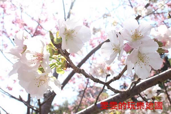 IMG_1430_副本.jpg