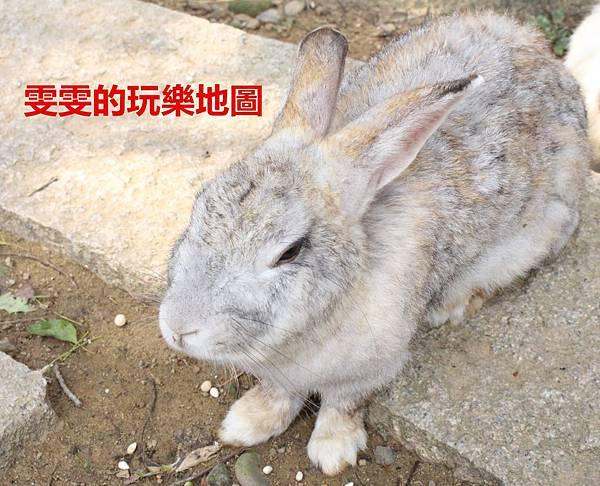 IMG_3393_副本.jpg