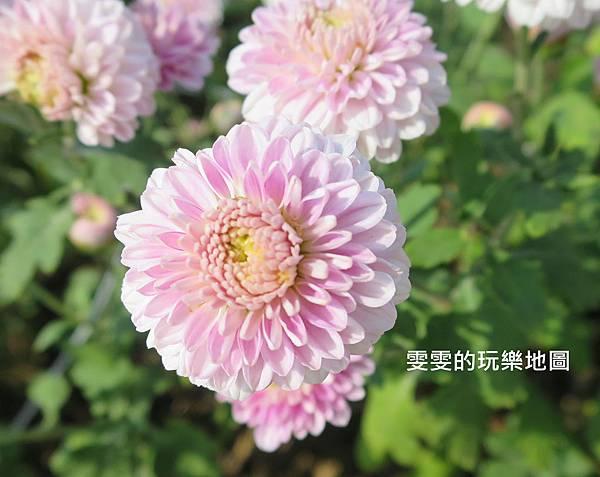 IMG_2048_副本.jpg