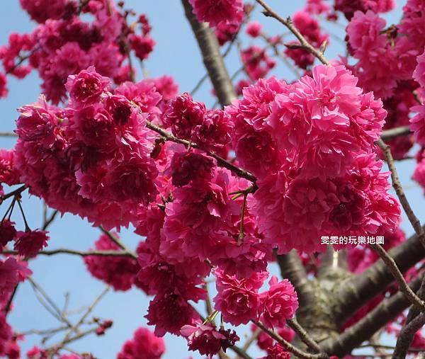 IMG_5549_副本.jpg