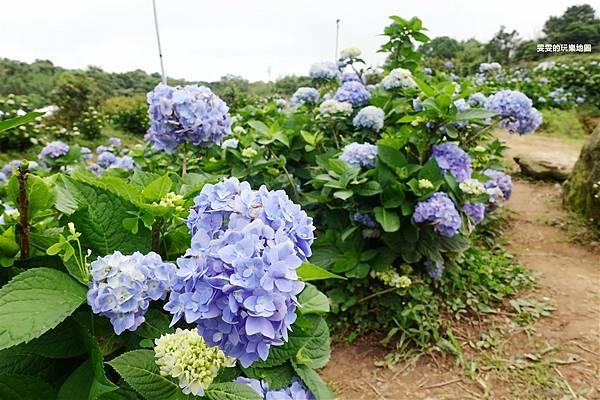 DSC07468_副本.jpg