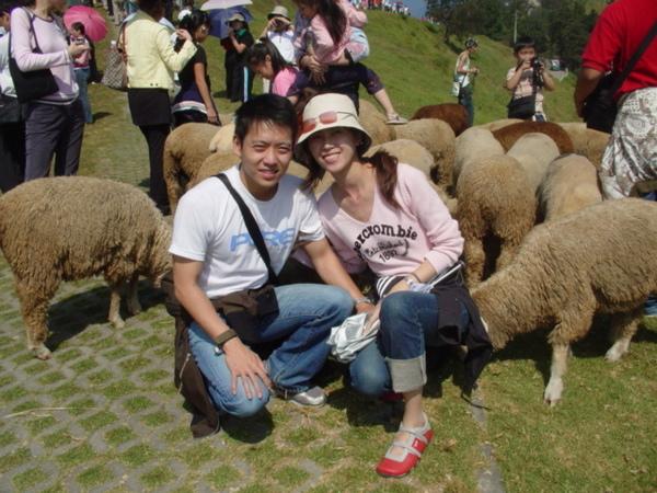 難得能和草原上的羊群合影..必拍啦