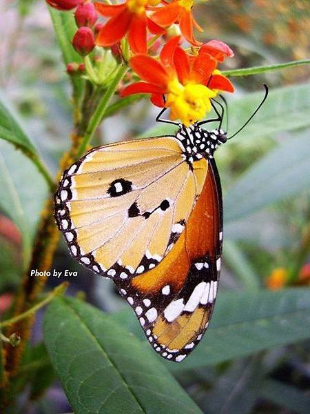 第一蝴蝶.JPG