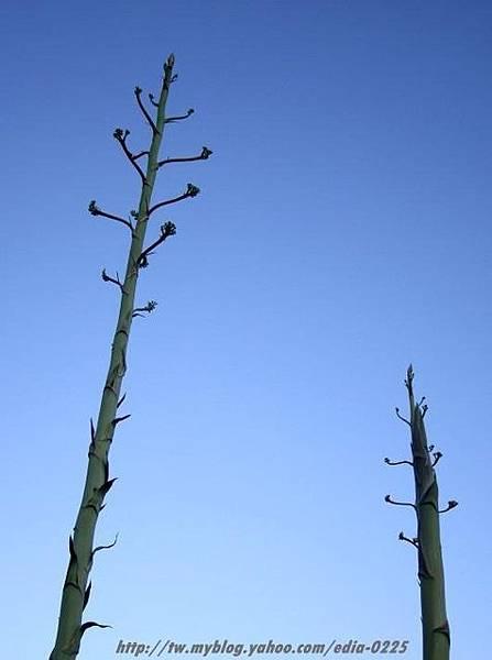 植物與天空 1.JPG