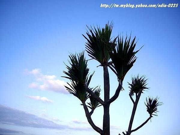 植物與天空 2.JPG