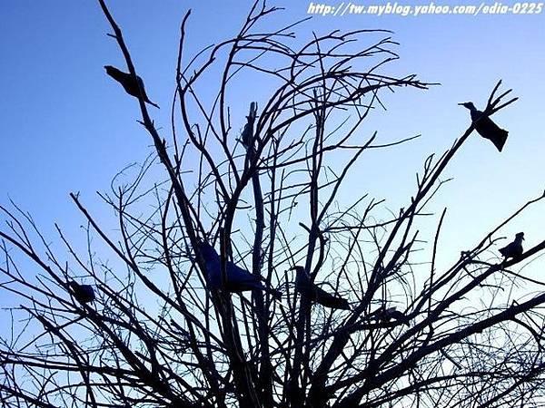 漂流木裝置~同林鳥.JPG
