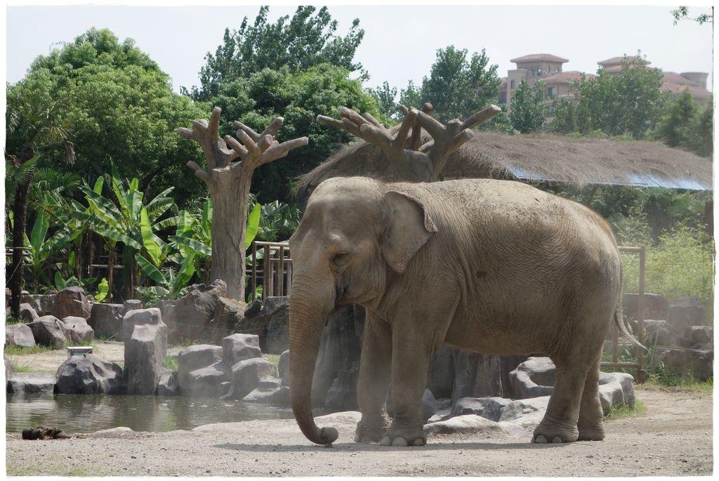 動物園-22