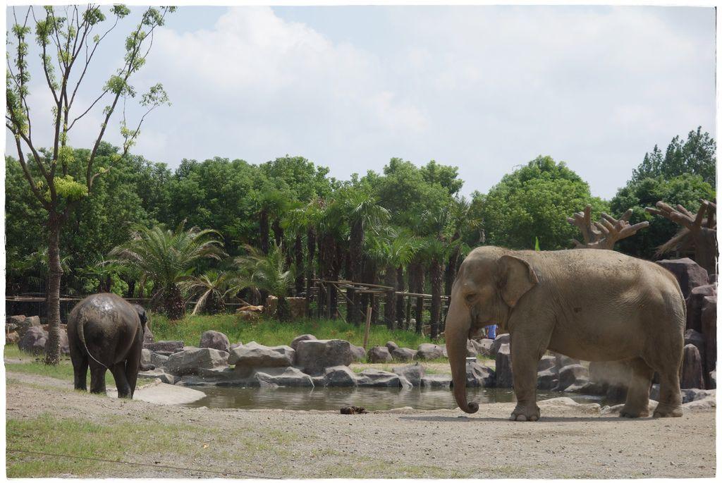 動物園-23