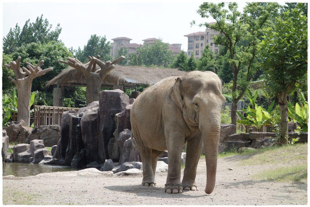 動物園-27