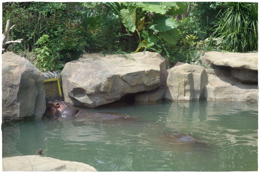 動物園-31