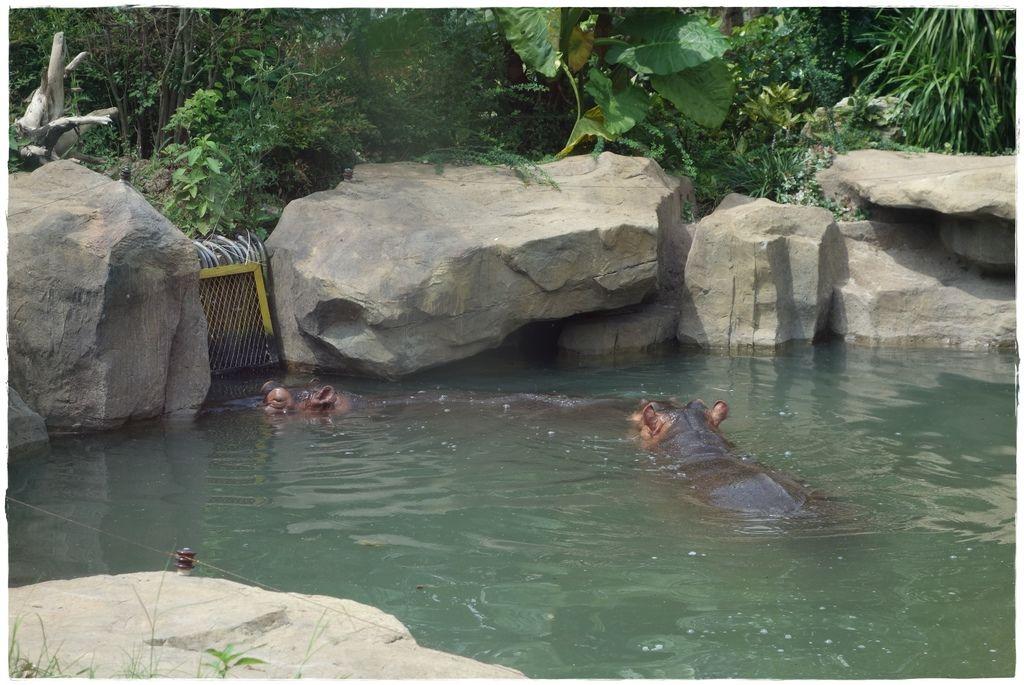 動物園-32