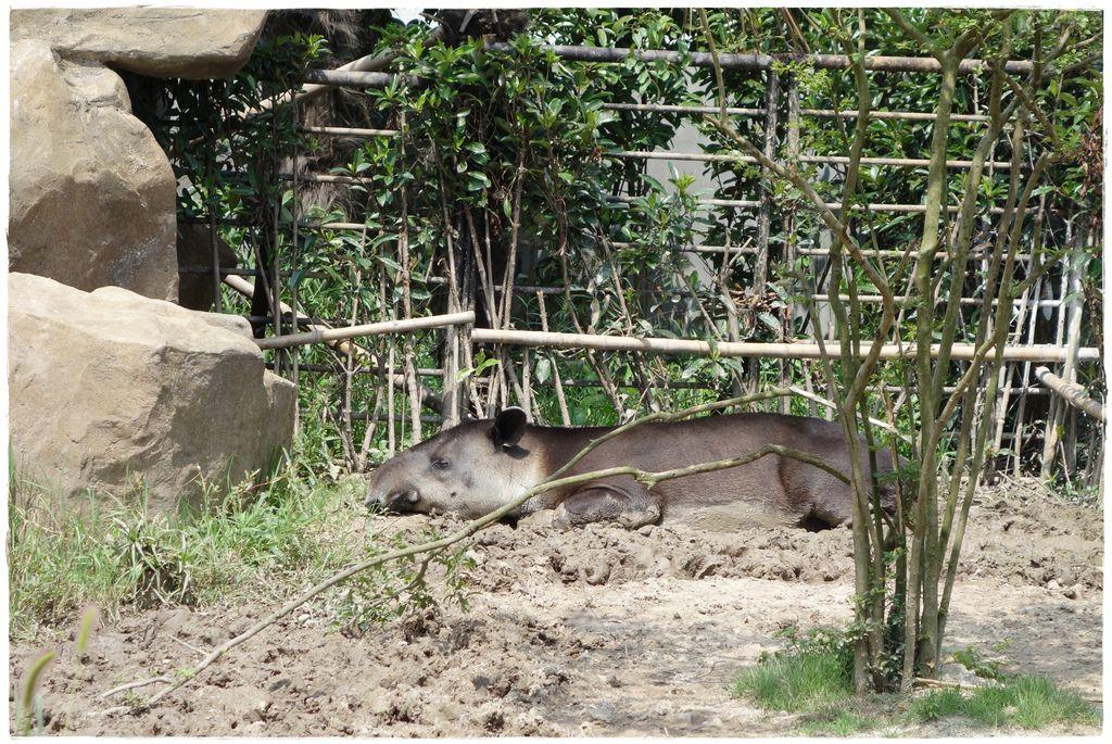 動物園-33