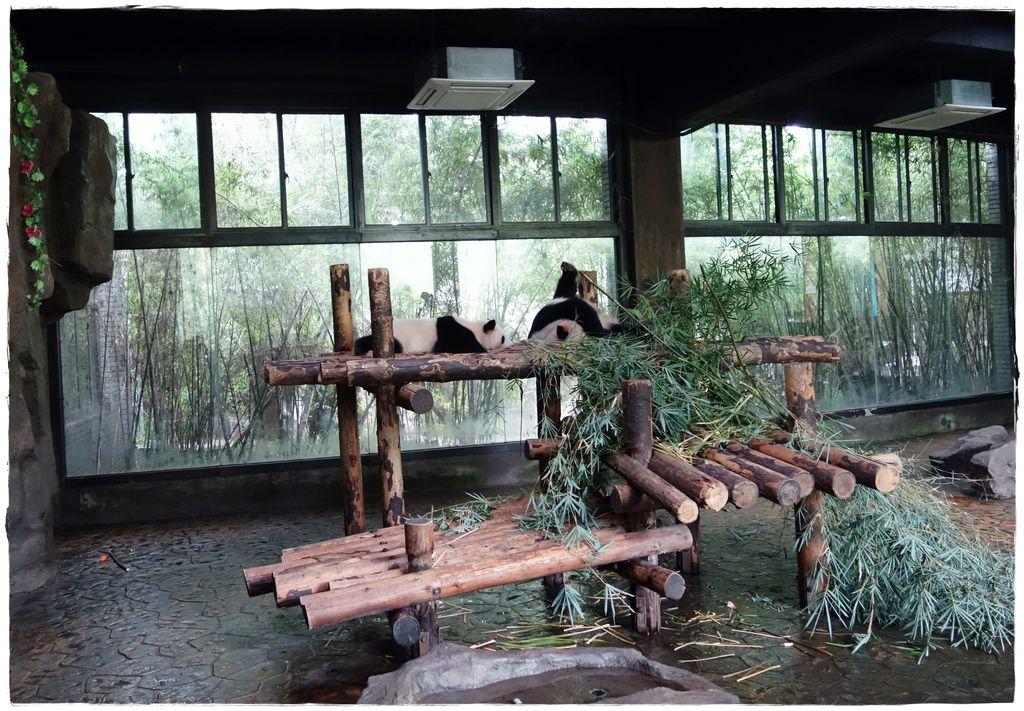 動物園-35