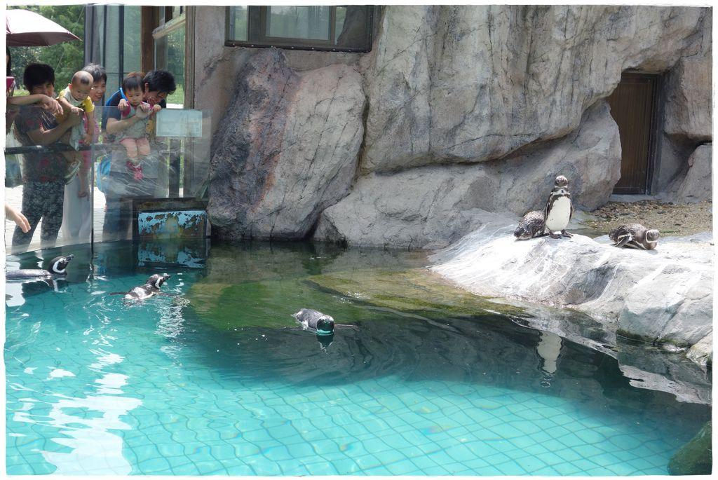 動物園-40