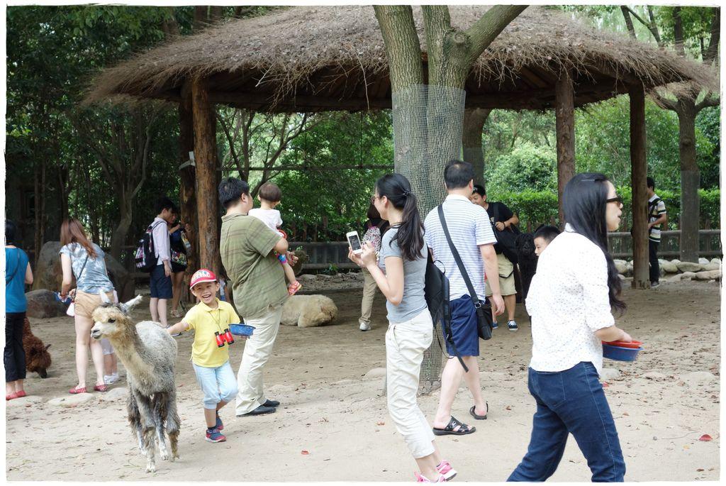 動物園-44
