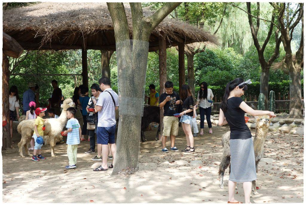 動物園-45