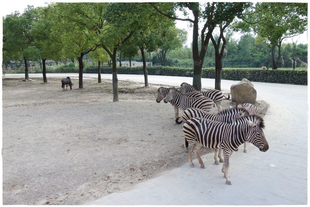 動物園-60