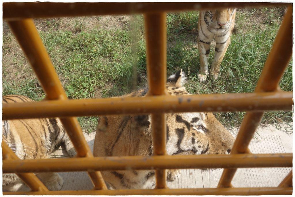 動物園-64