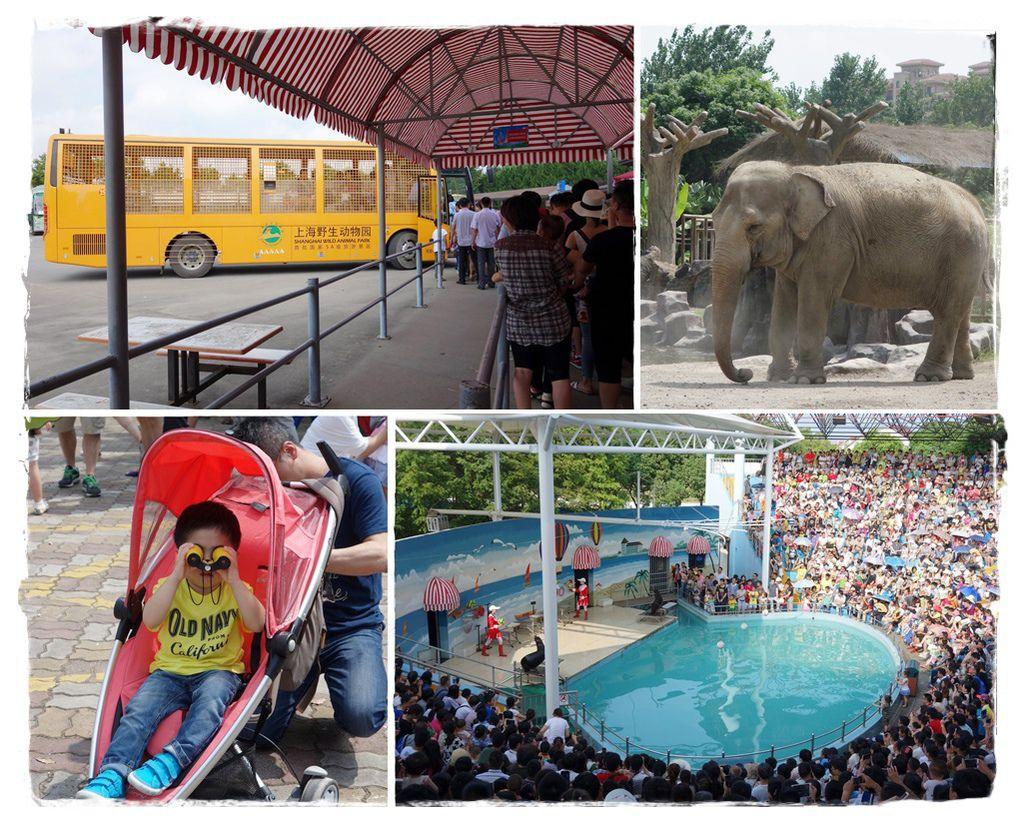 野生動物園封面