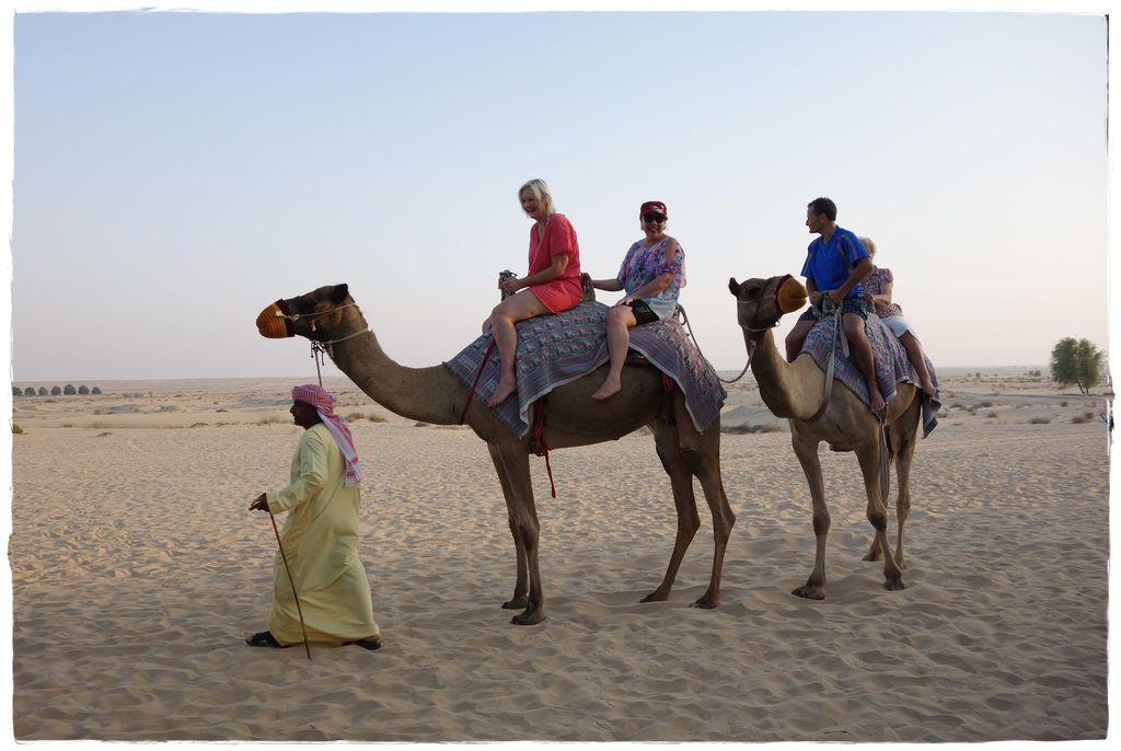 駱駝-1.JPG